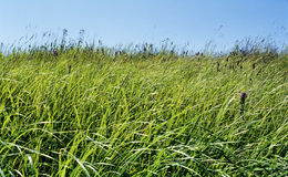 Green grass. Green green grass royalty free stock image