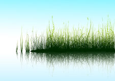 Green Grass. And blue sky with reflection in water. Additional vector format in EPS (v.8 Royalty Free Stock Photo