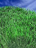 Green grass 6 Stock Image