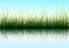 Green Grass. And blue sky with reflection in water. Additional vector format in EPS (v.8 Royalty Free Stock Photography