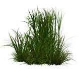 Green grass. Large clump on grass you might find in a field stock illustration