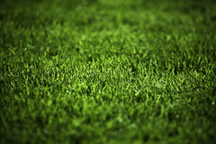 Green grass. Detail photo of green grass Royalty Free Stock Photo