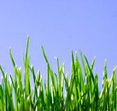 Green Grass. Young grass in the morning sun Stock Photography