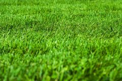 Green grass. Texture Stock Image
