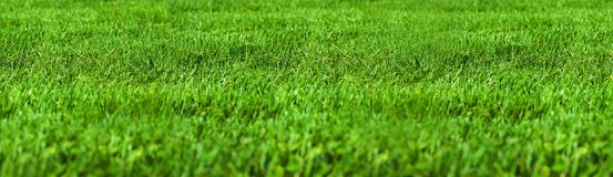 Green grass. Texture Stock Photography
