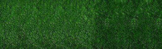 Green Grass. Panoramic Image of a Green Grass in the summer Royalty Free Stock Image