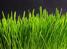 Green grass  Royalty Free Stock Photos