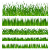 Green grass. Rows or borders of green grass Stock Photo