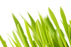 Green grass. On a white background Royalty Free Stock Images