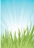 Green grass. Vector green grass over blue shiny sky Stock Image