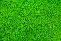 - green grass Obrazy Royalty Free