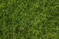 Green grass. Close up at sunny day Stock Photo