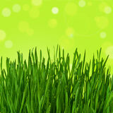 Green grass on abstract background. Green grass on abstract blur background Royalty Free Stock Images