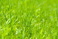 Green grass abstract background Royalty Free Stock Photos