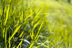 Green grass abstract background Royalty Free Stock Image