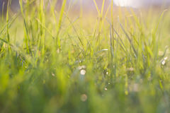 Green grass. Abstract natural backgrounds with beauty bokeh Stock Photos