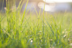 Green grass. Abstract natural backgrounds with beauty bokeh Stock Photo