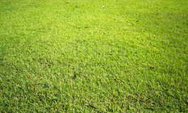 Green grass. Abstract Natural Green Grass Texture Stock Image