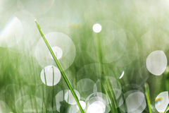 Green grass abstraction. Macro shot of green grass. Abstraction bokeh stock images