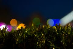 Green grass against a backdrop of blown out streetlights. Green grass against a streetlights royalty free stock photography