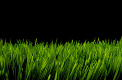 Green grass against black night sky Stock Photos
