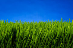 Green grass against blue sky Stock Image