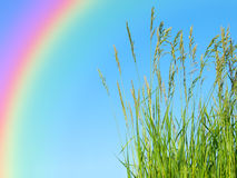 Green grass against blue sky Royalty Free Stock Image