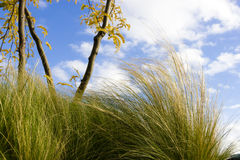 Green Grass against Blue Sky in windy weather. Stock Image