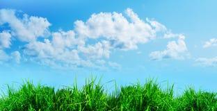 Green grass against a blue sunny sky Royalty Free Stock Photos