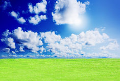 Green grass against a blue sunny sky Stock Photography