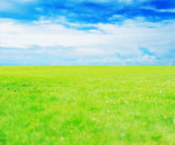 Green grass against a blue sunny sky Stock Photo