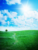 Green grass against a blue sunny sky Royalty Free Stock Photography