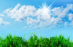 Green grass against a blue sunny sky Royalty Free Stock Images