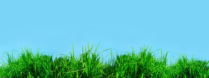 Green grass against a blue sunny sky Stock Images