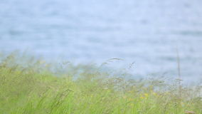 Green grass against blue water. Textural background of a bright green grass near the river. stock video footage