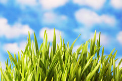 Green grass against the bright. Blue sky Stock Image