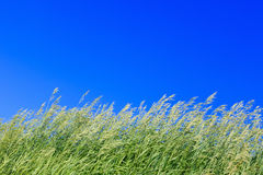 Green grass against the bright blue sky. Green grass against the bright blue sky Stock Images