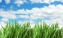 Green grass against  sky Royalty Free Stock Photos