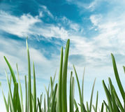 Green grass against the sky Stock Image