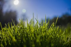 Green grass against the sky and sun.  Royalty Free Stock Photography