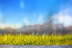Green grass against the sky in the sun, beautiful background.  Stock Images