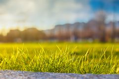 Green grass against the sky in the sun, beautiful background.  Royalty Free Stock Photos