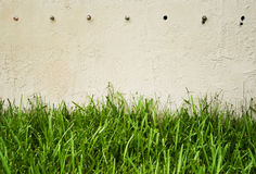 Green grass against wall Stock Photos