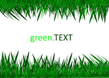 Green Grass Against A White Background. Stock Image