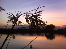 Sun set in Mikumi national Park. A green grass along the pool side Royalty Free Stock Photos