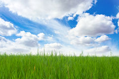 Free Green Grass And Blue Sky Stock Photography - 20915762