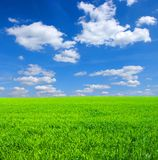 Green Grass And Sky Stock Images