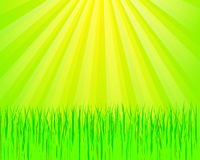 Green Grass And Sunlights Stock Images