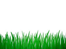 Green grass aquarelle picture Stock Images
