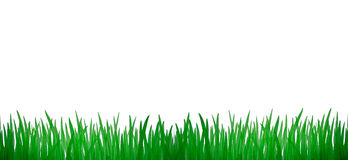 green grass aquarelle picture Royalty Free Stock Images